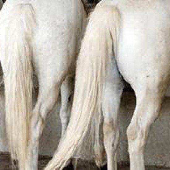 Шампунь-пятновыводитель Gallop Stain Removing для светлых лошадей от Carr&Day&Martin, 500 мл